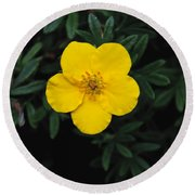 Buttercup Round Beach Towel