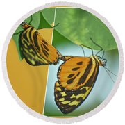 Butterflies Mating Out Of Bounds Round Beach Towel