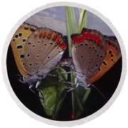 Butterfly 001 Round Beach Towel