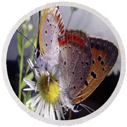 Butterfly 002 Round Beach Towel
