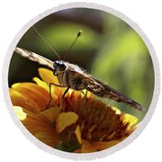 Butterfly 004 Round Beach Towel