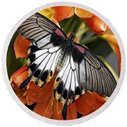Butterfly 006 Round Beach Towel