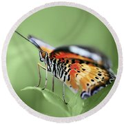 Butterfly 008 Round Beach Towel