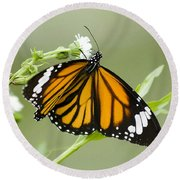Butterfly 009 Round Beach Towel
