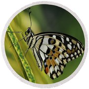 Butterfly 010 Round Beach Towel