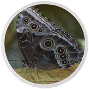 Butterfly 015 Round Beach Towel