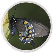 Butterfly 016 Round Beach Towel