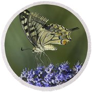 Butterfly 020 Round Beach Towel