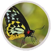 Butterfly 022 Round Beach Towel