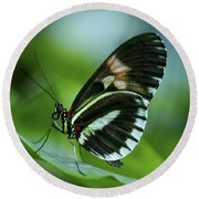 Butterfly 026 Round Beach Towel