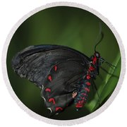 Butterfly 028 Round Beach Towel