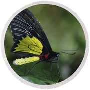 Butterfly 029 Round Beach Towel