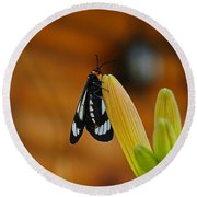 Butterfly An3606-13 Round Beach Towel