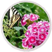 Butterfly And Sweet Williams Round Beach Towel