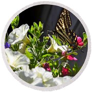 Swallowtail Butterfly On White Petunia Flower Round Beach Towel