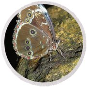 Butterfly At Night Round Beach Towel