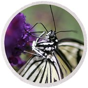 Butterfly Close Up  Round Beach Towel