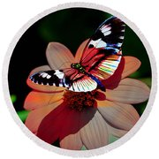Butterfly Dont Fly Away Round Beach Towel