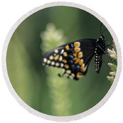 Butterfly E. Black Swallowtail Round Beach Towel