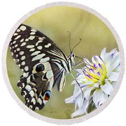 Butterfly Food At Dahlia Flower Round Beach Towel