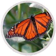 Butterfly Garden - Monarchs 10 Round Beach Towel
