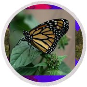 Butterfly Gold Photograph Insect Taken At Costa Rica Travel Vacation Unique Digital Painted Border B Round Beach Towel