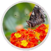 Butterfly Hanging Out On Wildflowers Round Beach Towel