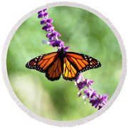 Butterfly - Monarch Round Beach Towel