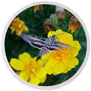 Butterfly Moth Round Beach Towel