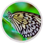 Butterfly On A Leaf Round Beach Towel