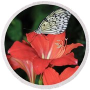 Butterfly On A Lily Round Beach Towel