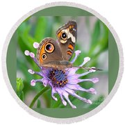 Butterfly On African Daisy Round Beach Towel