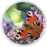 Butterfly On Buddleia Round Beach Towel