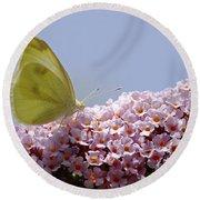 Butterfly On Buddleia Round Beach Towel
