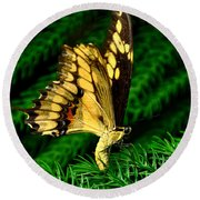 Butterfly On Pine Round Beach Towel
