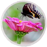 Butterfly On Pink Flower Round Beach Towel