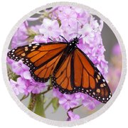 Butterfly On Pink Phlox Round Beach Towel