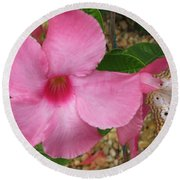 butterfly on the Mandevilla Round Beach Towel