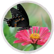 Butterfly On Zinnia Round Beach Towel