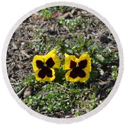 Butterfly Pansies Round Beach Towel