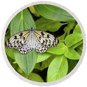 Butterfly Perching On Leaf In A Garden Round Beach Towel