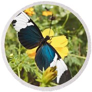 Butterfly Sara Longwing Round Beach Towel