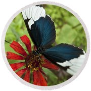 Butterfly Sara Longwing II Round Beach Towel