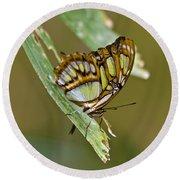 Butterfly Siproeta Stelenes Round Beach Towel