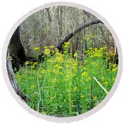 Butterweed Florida Wildflower Round Beach Towel