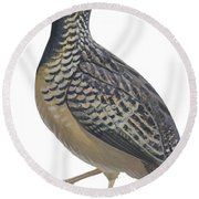 Button Quail Round Beach Towel by Anonymous