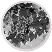 Bw Hanging Thompson Grapes Sultana Poster Look Round Beach Towel