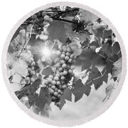 Bw Lens Flare Hanging Thompson Grapes Sultana Round Beach Towel