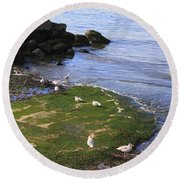 By The Shoreline Round Beach Towel
