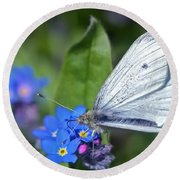 Cabbage White Butterfly On Forget-me-not Round Beach Towel